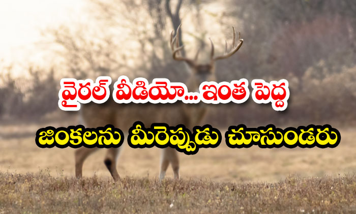 TeluguStop.com - Viral You Will Never See Such Big