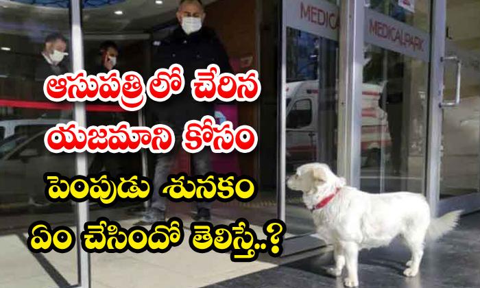 Pet Dog Waited Outside Hospital Sick Owner Turkey-TeluguStop.com