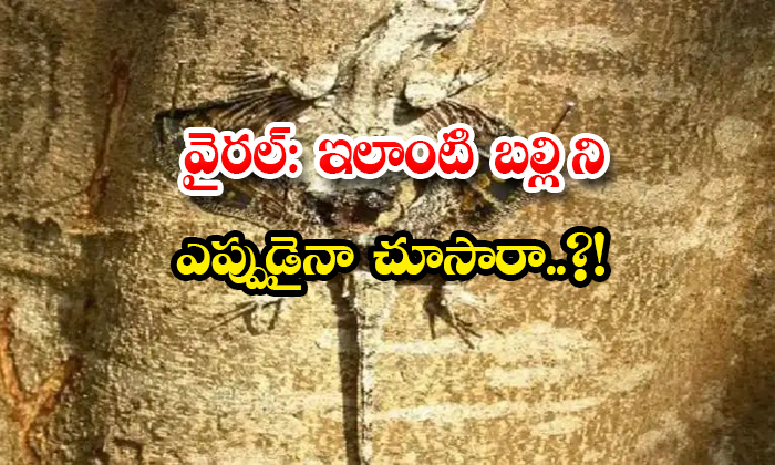 Viral Have You Ever Seen A Lizard Like This-TeluguStop.com