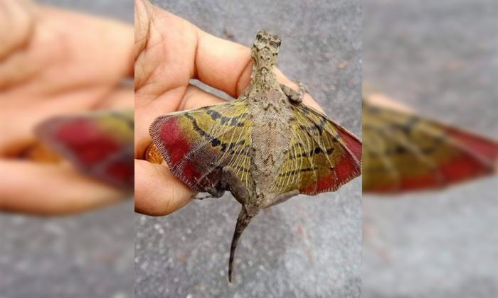 Viral Have You Ever Seen A Lizard Like This-వైరల్: ఇలాంటి బల్లి ని ఎప్పుడైనా చూసారా..-General-Telugu-Telugu Tollywood Photo Image-TeluguStop.com
