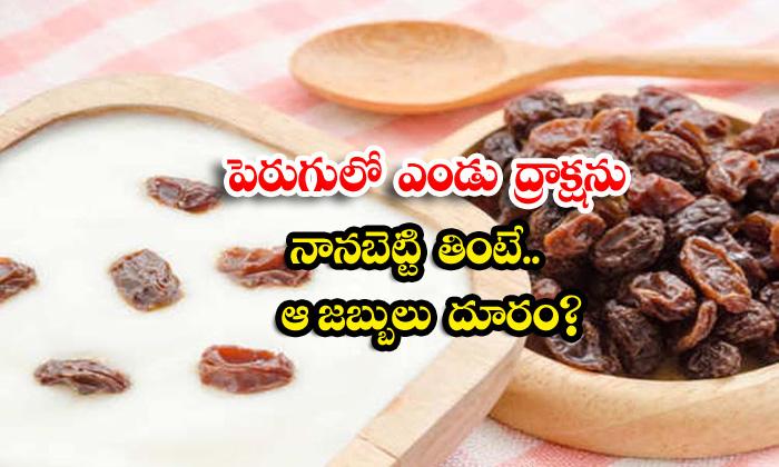 TeluguStop.com - Health Benefits Of Curd With Raisins
