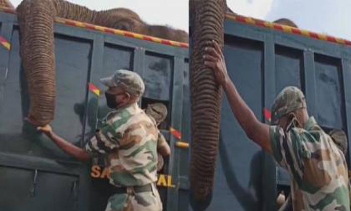 The Officer Cried Out That The Elephant Was Dead-వైరల్: మూగజీవి ప్రాణం పోయిందని వెక్కివెక్కి ఏడ్చిన ఆఫీసర్..-General-Telugu-Telugu Tollywood Photo Image-TeluguStop.com