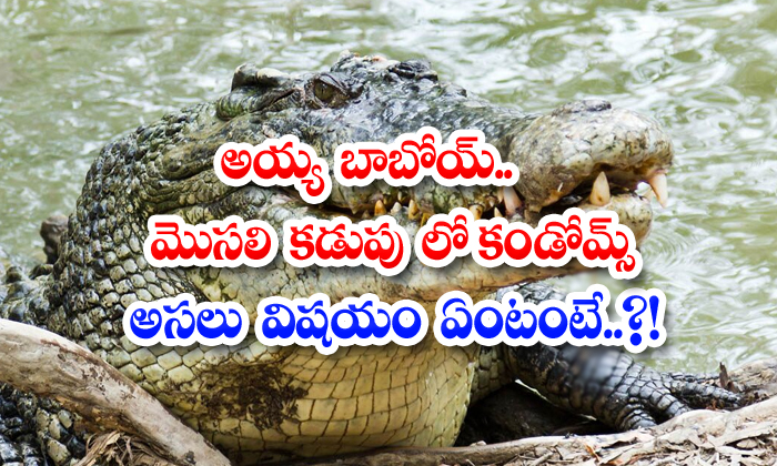 Ayya Condoms In Crocodile Stomach What Is The Real Thing-TeluguStop.com
