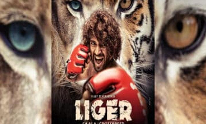 Vijay Devarakonda Movie Liger Release Date Leaked-లైగర్' విషయంలో చిన్న లీక్ ఇచ్చిన పూరి.. రౌడీ ఫ్యాన్స్ ఇప్పుడు ఖుషీనా-Latest News - Telugu-Telugu Tollywood Photo Image-TeluguStop.com