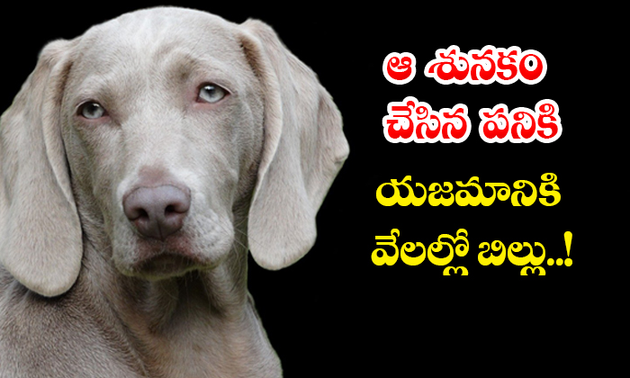 TeluguStop.com - Bill In The Thousands To The Owner For The Work Done By That Dog