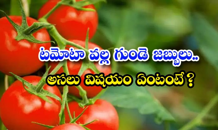 Tomato Heart Disease Real Truth Beauty Health Benefits-TeluguStop.com