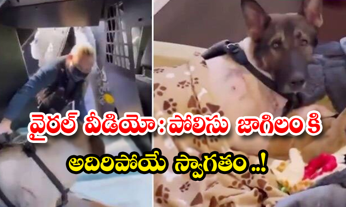 TeluguStop.com - Viral Video Grand Welcome To K9 Dogs Inus