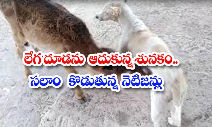 TeluguStop.com - The Dog That Defended Legaduda Netizens