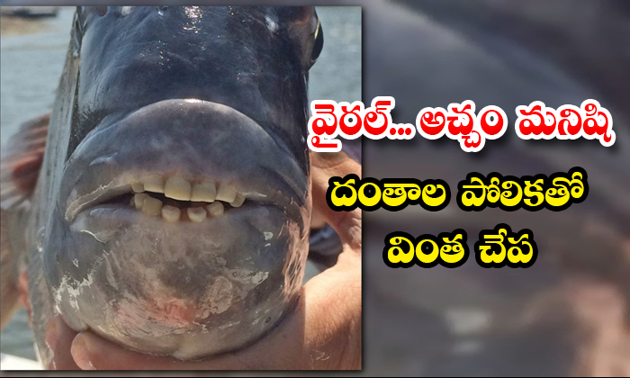 Viral Strange Fish With A Resemblance To A Mans Teeth-TeluguStop.com