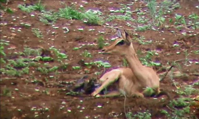 Corona Antibodies Found In That Animal-TeluguStop.com