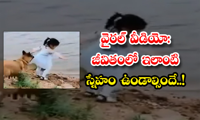 TeluguStop.com - Viral Video There Must Be Such A Friendship In Life Dog Rescues Girl