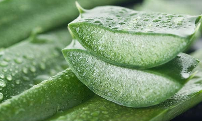 Bitter Gourd Helps To Reduce Pimples-TeluguStop.com