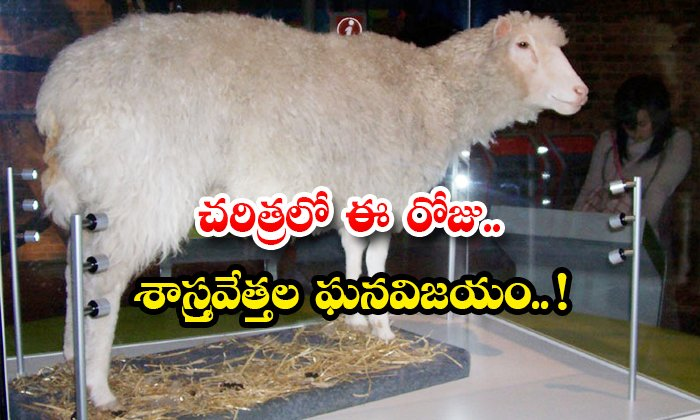 TeluguStop.com - Cloned Dolly Sheep Born On This Day Announcement Scientists In The Lab