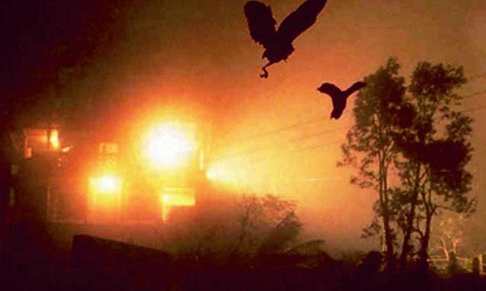 Harakiri Birds End Their Life Assam Jatinga Village-TeluguStop.com