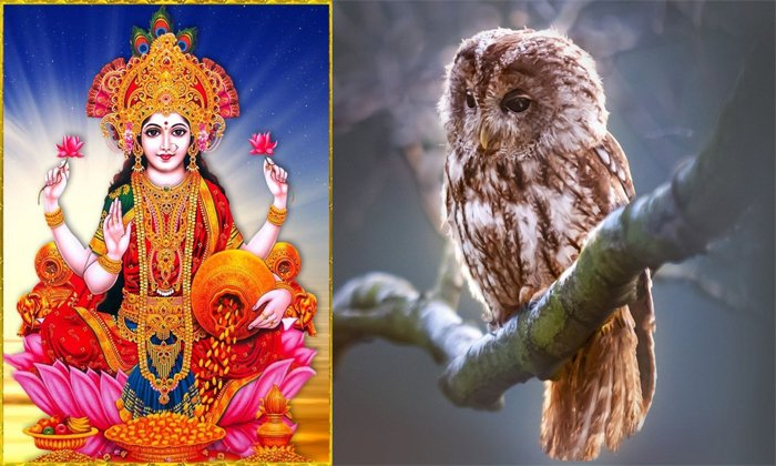 Do You Know The Significance Of The Owl In Hindu Jurisprudence-TeluguStop.com