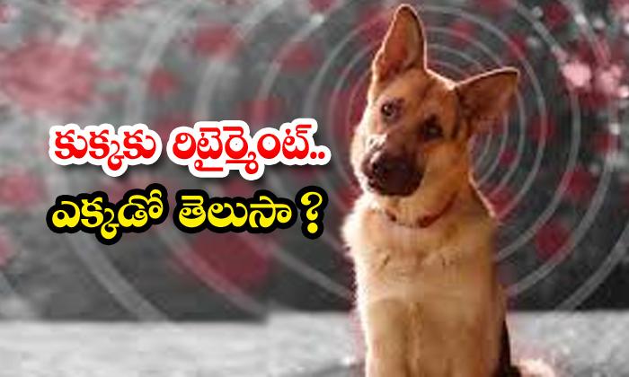 Police Gave Retirement To Dog In Maharashtra-TeluguStop.com