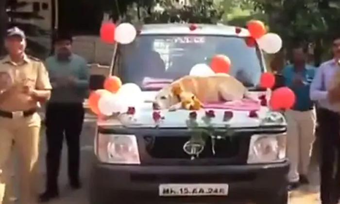 Police Gave Retirement To Dog In Maharashtra-కుక్కకు రిటైర్మెంట్.. ఎక్కడో తెలుసా-General-Telugu-Telugu Tollywood Photo Image-TeluguStop.com