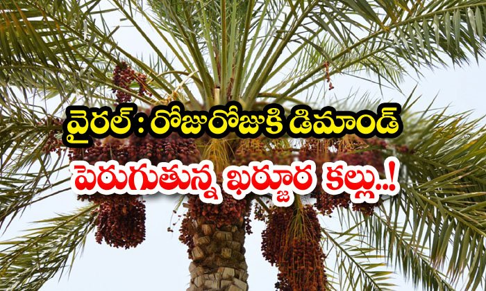 TeluguStop.com - Viral Demand For This Specialty Has Grown Significantly As A Result Of Recent Corporate Scandals