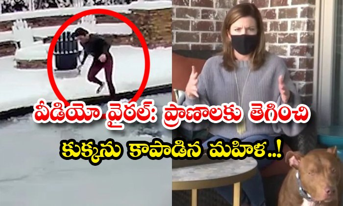 Viral Video Woman Saves Dog Risking Her Life-TeluguStop.com