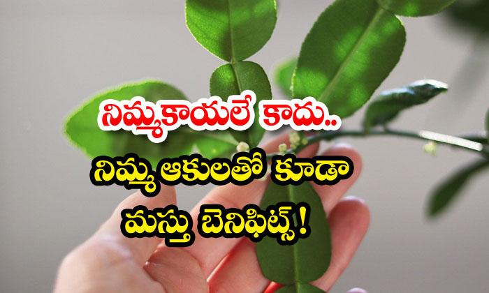 TeluguStop.com - Wonderful Health Benefits Of Lemon Leaves
