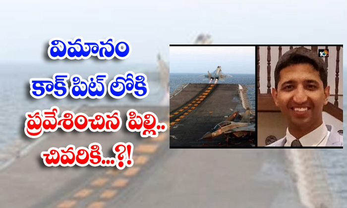 Cat Flight Pilot Flight Drving Air Viral News Viral Latest-TeluguStop.com