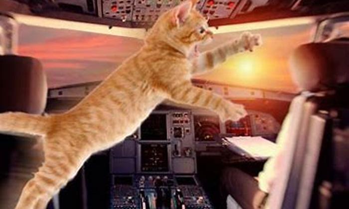 Cat Flight Pilot Flight Drving Air Viral News Viral Latest-విమానం కాక్ పిట్ లోకి ప్రవేశించిన పిల్లి.. చివరకి..-General-Telugu-Telugu Tollywood Photo Image-TeluguStop.com