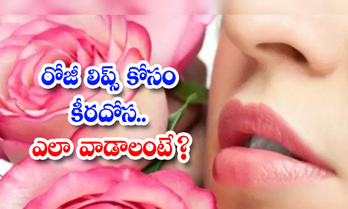 Cucumber Helps To Reduce Lips Darkness-TeluguStop.com
