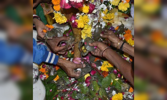 Devotees Offer Live Crabs To Lord Shiva At This Temple In Surat-TeluguStop.com