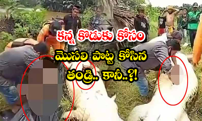 Father Tears The Crocodile Stomach For Son But-TeluguStop.com