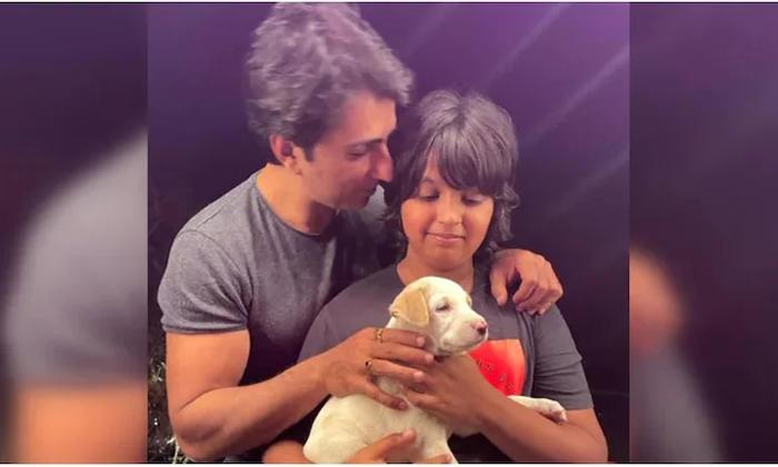 Sonu Sood Son Adopts Abandoned Puppy-మంచిపని చేసి వార్తల్లో నిలిచిన సోనూసూద్ కొడుకు.. ఏం చేశాడంటే..-Latest News - Telugu-Telugu Tollywood Photo Image-TeluguStop.com