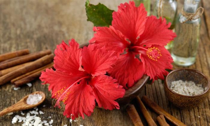 Home Remedies For Get Rid Of Head Itching-తలలో దురద ఇబ్బంది పెడుతుందా..అయితే ఈ టిప్స్ మీకే-Latest News - Telugu-Telugu Tollywood Photo Image-TeluguStop.com