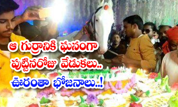 Happy Birthday To That Horse Meals All Over The Place-TeluguStop.com