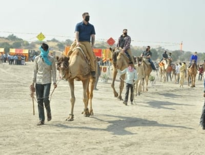 Victims Of Apathy, Camel Numbers Dwindling In Rajasthan-TeluguStop.com
