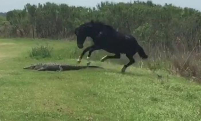 Viral Video The Horse That Attacked The Old Man Finally-వైరల్ వీడియో: ముసలి పై అటాక్ చేసిన గుర్రం.. చివరికి..-General-Telugu-Telugu Tollywood Photo Image-TeluguStop.com