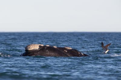 Amid Slowdown, Scientists Assess Changes In Marine Life Behaviour-Environment/Wildlife News-Telugu Tollywood Photo Image-TeluguStop.com