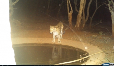 Animals In Telangana Forests Flock To Saucer Pits To Quench Thirst-Environment/Wildlife News-Telugu Tollywood Photo Image-TeluguStop.com