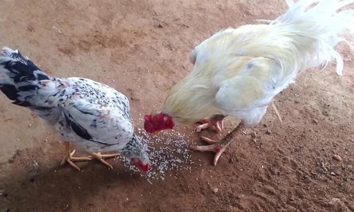 If These Are Offered To Animals And Birds Problems Are Solved-జంతువులకు, పక్షులకు ఇవి సమర్పిస్తే.. సమస్యలు పరిష్కారం..-Latest News - Telugu-Telugu Tollywood Photo Image-TeluguStop.com