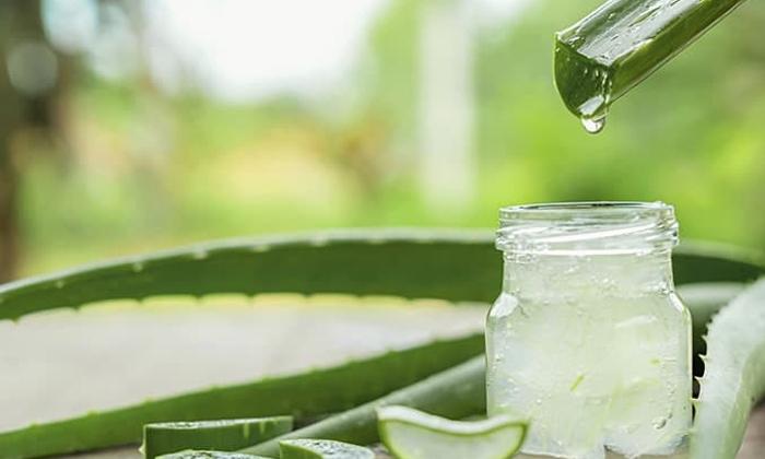Home Remedies For How To Reduce Swollen Gums-చిగుళ్ల వాపుతో బాధపడుతున్నారా..అలోవెరతో చెక్ పెట్టేయండి-Latest News - Telugu-Telugu Tollywood Photo Image-TeluguStop.com