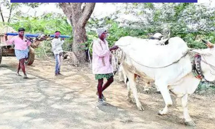 Viral The Farmer Who Turned His Sons Into Buffaloes Where-వైరల్ : కన్న కొడుకులనే కాడెద్దులుగా మార్చిన రైతు..ఎక్కడంటే..-General-Telugu-Telugu Tollywood Photo Image-TeluguStop.com