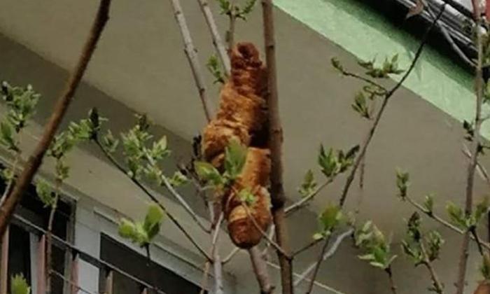 Strange Animal Thought After Seeing It But In The End-వైరల్: దానిని చూసి వింత జంతువు అనుకున్నారు.. కానీ చివరకి..-General-Telugu-Telugu Tollywood Photo Image-TeluguStop.com