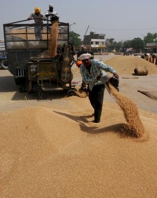 65% More Wheat Procured In Rabi Season Than Last Year-General-English-Telugu Tollywood Photo Image-TeluguStop.com