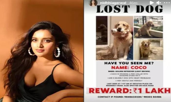 Telugu 1 Lakh Rupees, Niddhi Agerwal Pet Lost, Nidhhi Agerwal, Nidhi Agarwal, Nidhi Agerwal Post Goes Viral In Social Media, One Lakh Reward, Pet Lost Reward, Post Goes Viral, Social Media-Movie