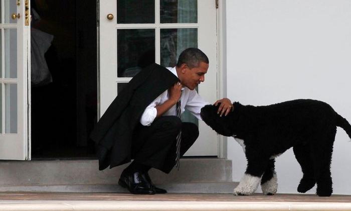 Ex Us President Barack Obamas Family Dog Bo A Star Of The White House Dies-TeluguStop.com