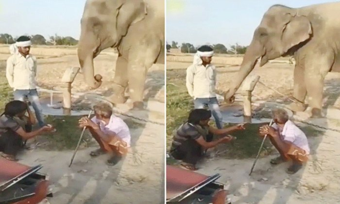 Viral Video A Thirsty Elephant Pumping A Bore For Drinking Water-వైరల్ వీడియో: బోరు పంపు కొడుతూ దాహం తీర్చుకున్న ఏనుగు-General-Telugu-Telugu Tollywood Photo Image-TeluguStop.com