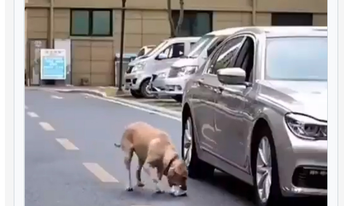 Viral Video A Dog Doing That And Teaching People A Lesson-TeluguStop.com