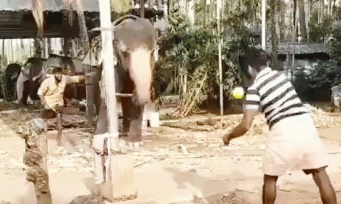 Viral Video How Well Does This Elephant Play Cricket-TeluguStop.com