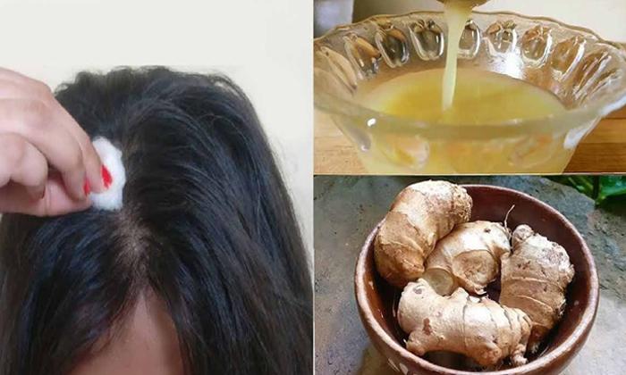 Ginger Help To Reduce Dandruff Naturally-TeluguStop.com