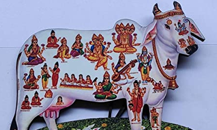 Interesting Facts About Gomatha Puja-గోవు ఏ భాగంలో ఏ దేవతలు కొలువై ఉంటారో తెలుసా-Latest News - Telugu-Telugu Tollywood Photo Image-TeluguStop.com