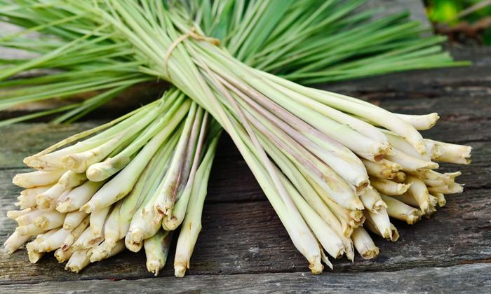 Lemongrass Helps To Reduce Pimples-TeluguStop.com