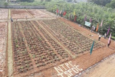 NTPC-Ramagundam Showing New Way Of Urban Foresting-General-English-Telugu Tollywood Photo Image-TeluguStop.com